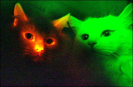 redglowingcat