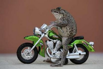 harlyfrog