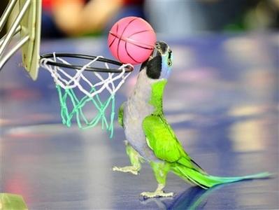 parrotball.jpg