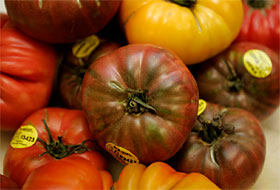 NANCEE E. LEWIS / Union-Tribune Heirloom tomatoes have found their way into many restaurants after an outbreak of salmonella linked to raw tomatoes has led to the removal of certain varieties from the market.