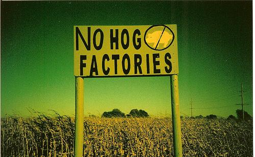 no-hog-factories