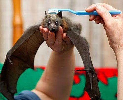 bat-brush