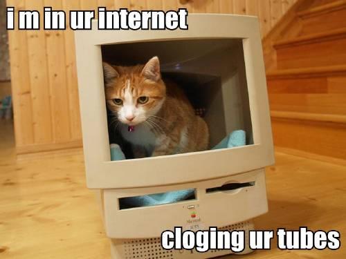 internet-fail-cat