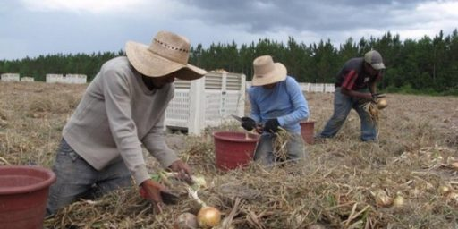 Farmers Finding Few Americans Willing To Do Jobs Immigrants Do