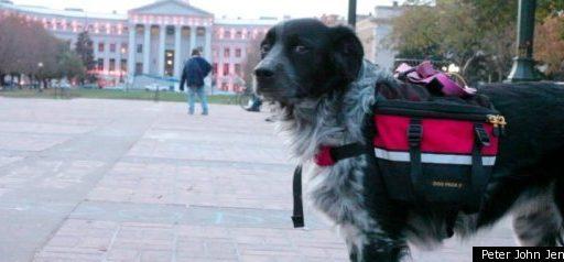 Occupy Denver Picks Their Leader: Shelby The Dog