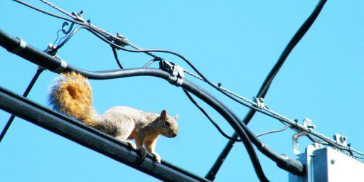Squirrels v. The Internet