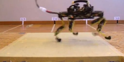 I For One Welcome Our New Robot Cat Overlords