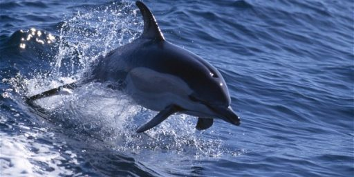 Ukraine's Military Dolphins Defect To Russia