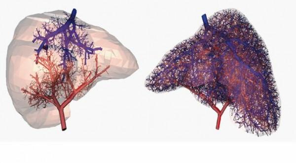 vascular-network-human-liver-3d-printing