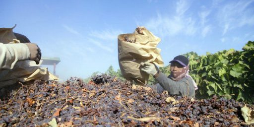 Supreme Court Rules In Favor Of Raisin Farmers In Takings Case